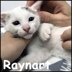 Raynart