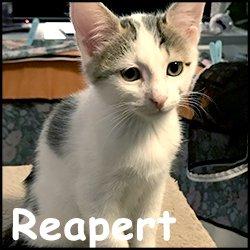 Reapert