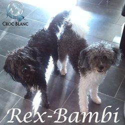 Rex et Bambi