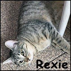 Rexie