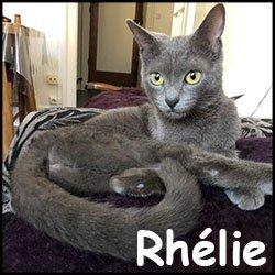 Rhélie