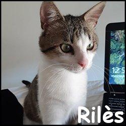 Rilès