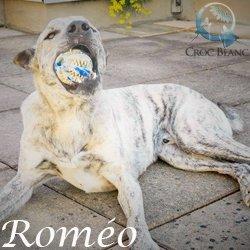 Roméo2