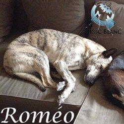 Roméo