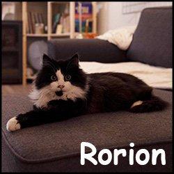 Rorion