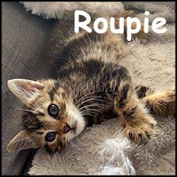 Roupie