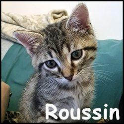 Roussin
