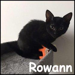 Rowann