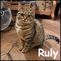 Ruly