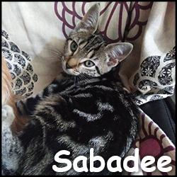 Sabadée