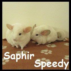 Saphir et speedy