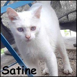 Satine 2