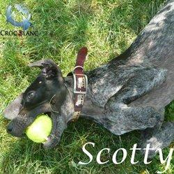 Scottty