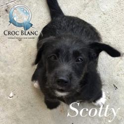 Scotty3