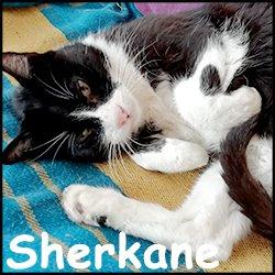 Sherkane