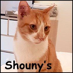 Shouny's
