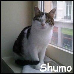 Shumo