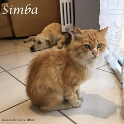 simbachat