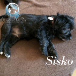 Sisko1