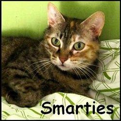 Smarties 2