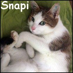 Snapi