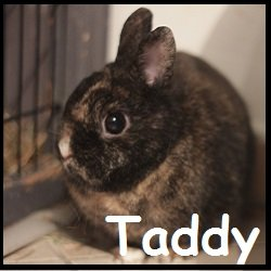 Taddy