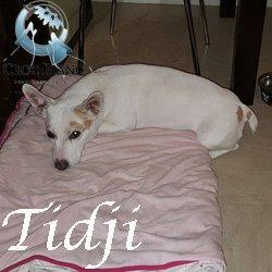 Tidji3