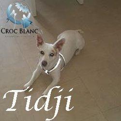 Tidji4