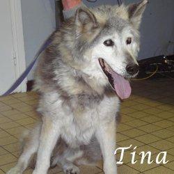 Tina malamute