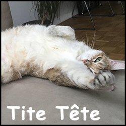 Tite Tete