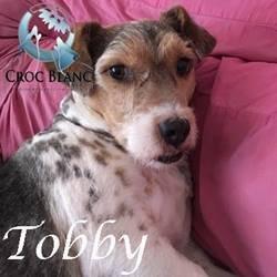 Tobby