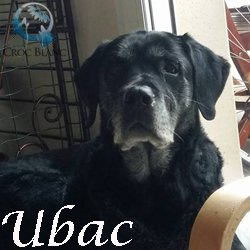 Ubac2