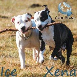Xena et Ice