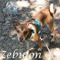 Zebulon 2