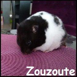 zouzoute