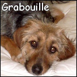 Grabouille